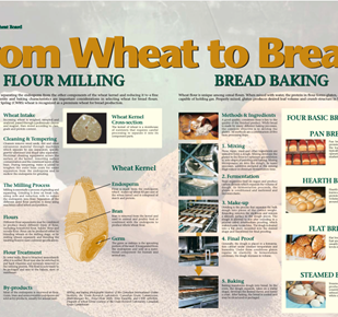 From Wheat to Bread Cover Image